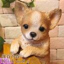 犬 置物 チワワ ライトブラウン 子いぬ イヌ ドッグ リアルな犬の置物 ぶらさがりドッグ 動物オブジェ ガー…