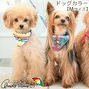 ARNOLD PALMER カラー Mサイズ 犬用 ブランドカラー ブランド犬具 ブランド首輪 散歩