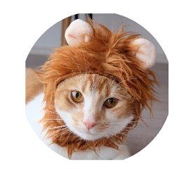 ねこの変身かぶりもの!ネコ科最強ライオン変身ずきん