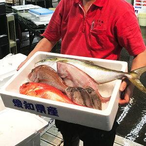 大阪市中央卸売市場直送 鮮魚セット魚 さかな セット 詰め合せ 鮮魚 贈答 ギフト
