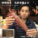 【特特特大】天然有頭エビ 6尾  1.5kg えび 海老 スーパービッグ 大きなエビ スーパージャンボ  シータイガ…