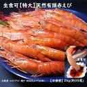 特大天然赤エビ 2kg(約35尾)【送料無料】赤えび 赤エビ あかえび アカエビ お取り寄せ 業務用 ストック パーティ …