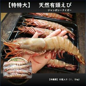 【最大250円クーポン】【特特大】天然有頭エビ 8尾  1.5kg えび 海老 スーパービッグ 大きなエビ スーパージャンボ  シータイガー 希少 レア