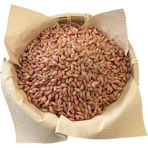 【こんにゃく芋栽培用】緑肥用えん麦[1kg](燕麦)【Z】