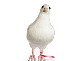 Dove【L】 鳩 ハト はと PUEBCO Artificial Birdsプエブコ アーティフィシャルバード112077【あす楽対応_東海】