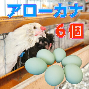 【アローカナ】【割れ防止紙パックケース】青いたまご 幸せを呼ぶ【玉子】6個入り 幸せを呼ぶ 青い玉子 卵 ビタミン 楽天 お買い物マラソン 楽天最安値