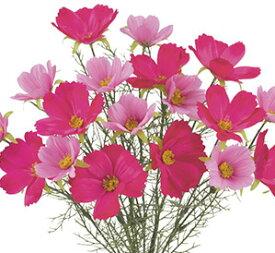 【造花 秋の造花】コスモスブッシュ18輪付(ビューティー) FLB-8078 [取り寄可]*