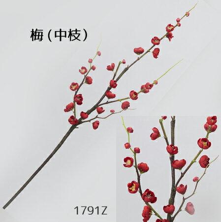 【中枝梅】1791Z