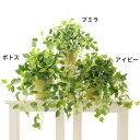 人工観葉植物 観葉植物 フェイクグリーン 観葉植物 人工 シンプル オフィス おしゃれ インテリア 小さめ 室内 鉢 人工…