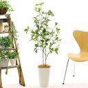 光触媒 人工 観葉植物 造花 フェイクグリーン 120cm 130cm シンプル オフィス おしゃれ インテリア 大型 室内 鉢 空気…