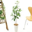 プレミアム光触媒 人工 観葉植物 リアル フェイクグリーン 100cm 110cm 造花 シンプル オフィス おしゃれ インテリア …