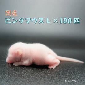 国産冷凍ピンクマウスL(100匹)約4.0cm/匹 冷凍マウス ピンクマウス 国産 冷凍餌 エサ 猛禽類 爬虫類 両生類 大型魚の肉食ペット用 クール便発送